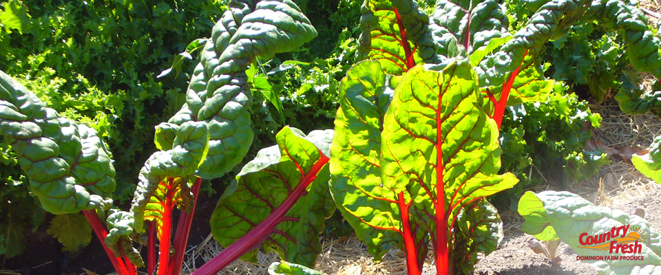 Growing Country Fresh Brand Red Beets