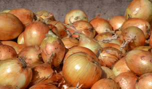 Onions from Dominion Farms