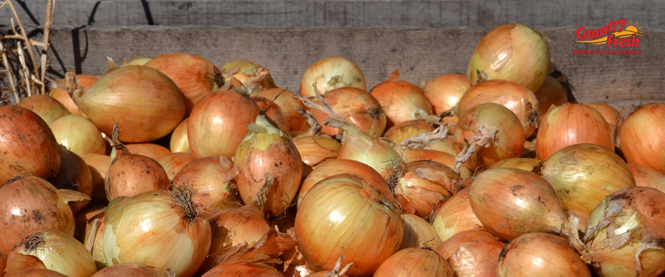 Picking Country Fresh Brand Onions